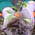 10-Unbelievably-Clever-Garden-Hacks-gardening-health