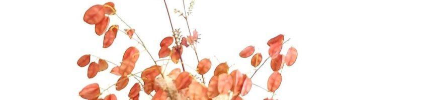 Introduction to Ikebana with Kathy Draper