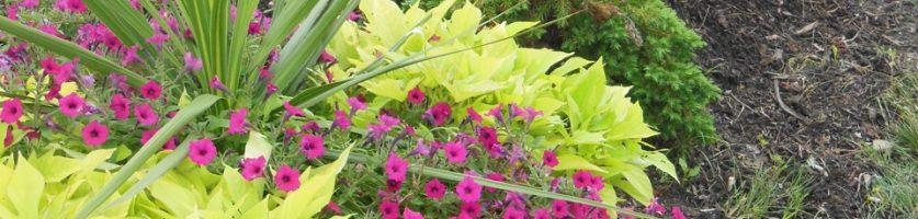Bayley Beach Plantings