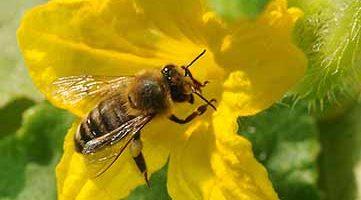 Pollinators Video