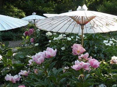 Attirant Field Trip: Cricket Hill Garden (Peony Heaven)
