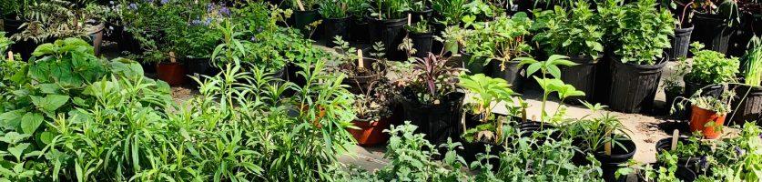 Spring Market Focus:  Perennials