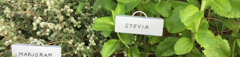 New Plant Labels at the Pinkney Flagpole Garden