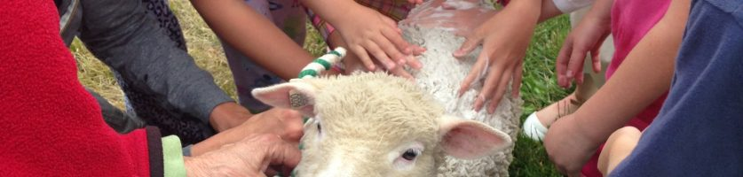Garden Farm Art Camp Thrills
