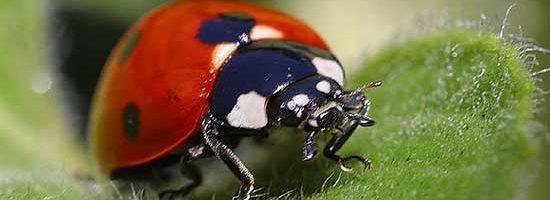 Ladybug Alert!