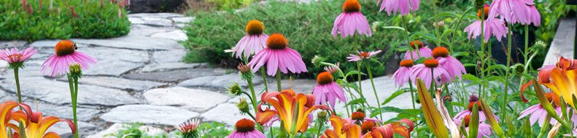 Creating a Pollinator Paradise in Your Backyard
