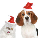 Portrait of a cat and dog in red christmas hats