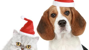 Dangerous Winter Holiday Plants for Pets