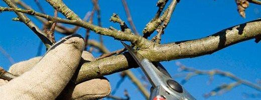 Hort Report: Pruning Tips for Winter