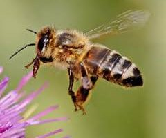 The Latest Bee News
