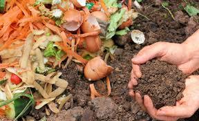 Norwalk Food Waste Collection Pilot Program Debut!