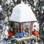 Winter-Bird-Feeding jpg-1