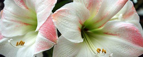Thank You – Bulb Planting