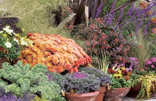 Workshop Wednesdays:  Fall Container Gardening 101
