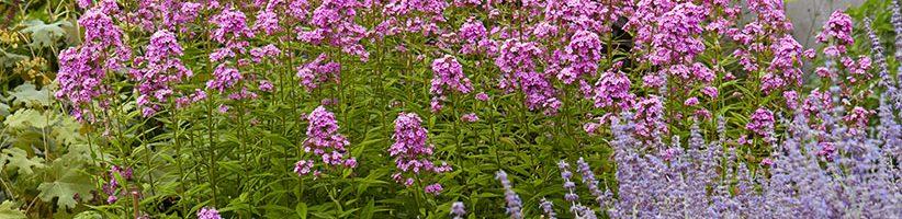 Dividing Plants in Summer