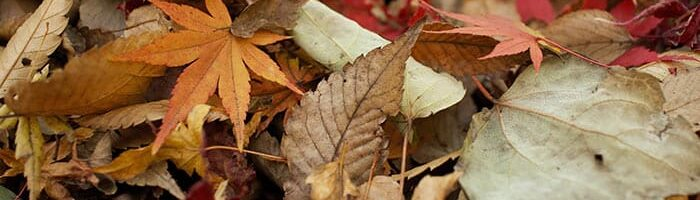 Fallen Leaves and Their Uses in the Garden