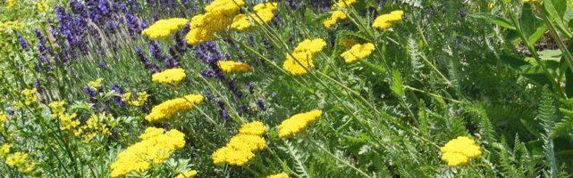 Pinkney Park Greening