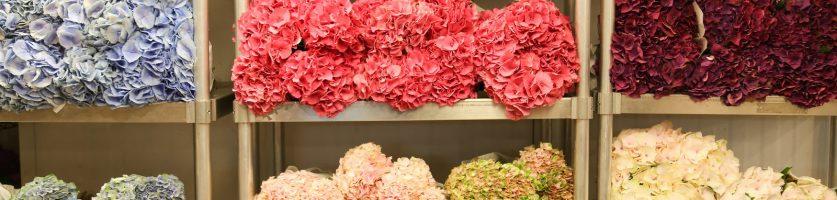 Thank You – NYC Flower Market Trip