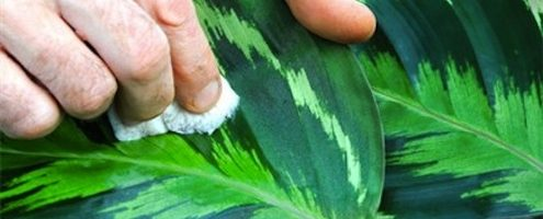 Tips on Winter Care for Houseplants from the NGA