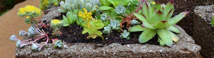 Thank You – Hypertufa & Succulents Workshops