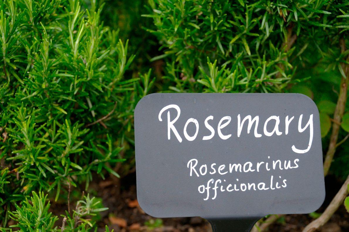 Rowayton Gardeners