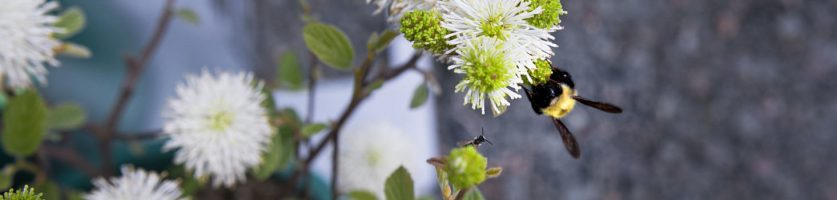 8 Steps to Design a Native Plant Landscape