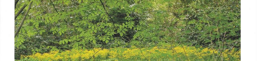 Native Shrubs, Trees and Plants for Pollinators