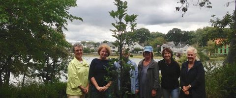 Oak Tree Planting at Farm Creek Preserve
