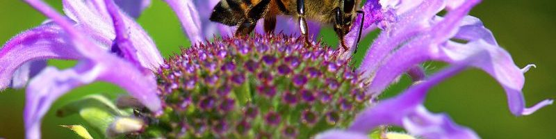 Pollinator Garden Plants and Practices