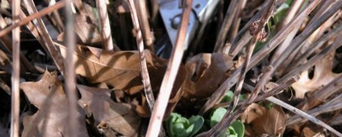 RCC Garden Cleanup Day – Join Us!