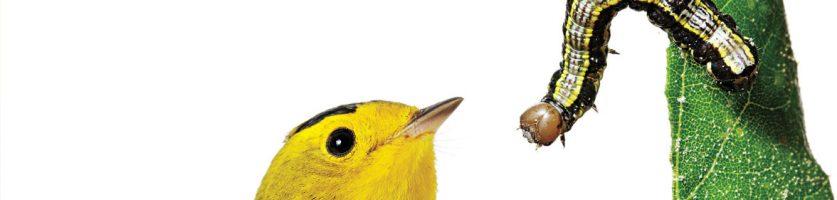 So You Say You Love Birds?