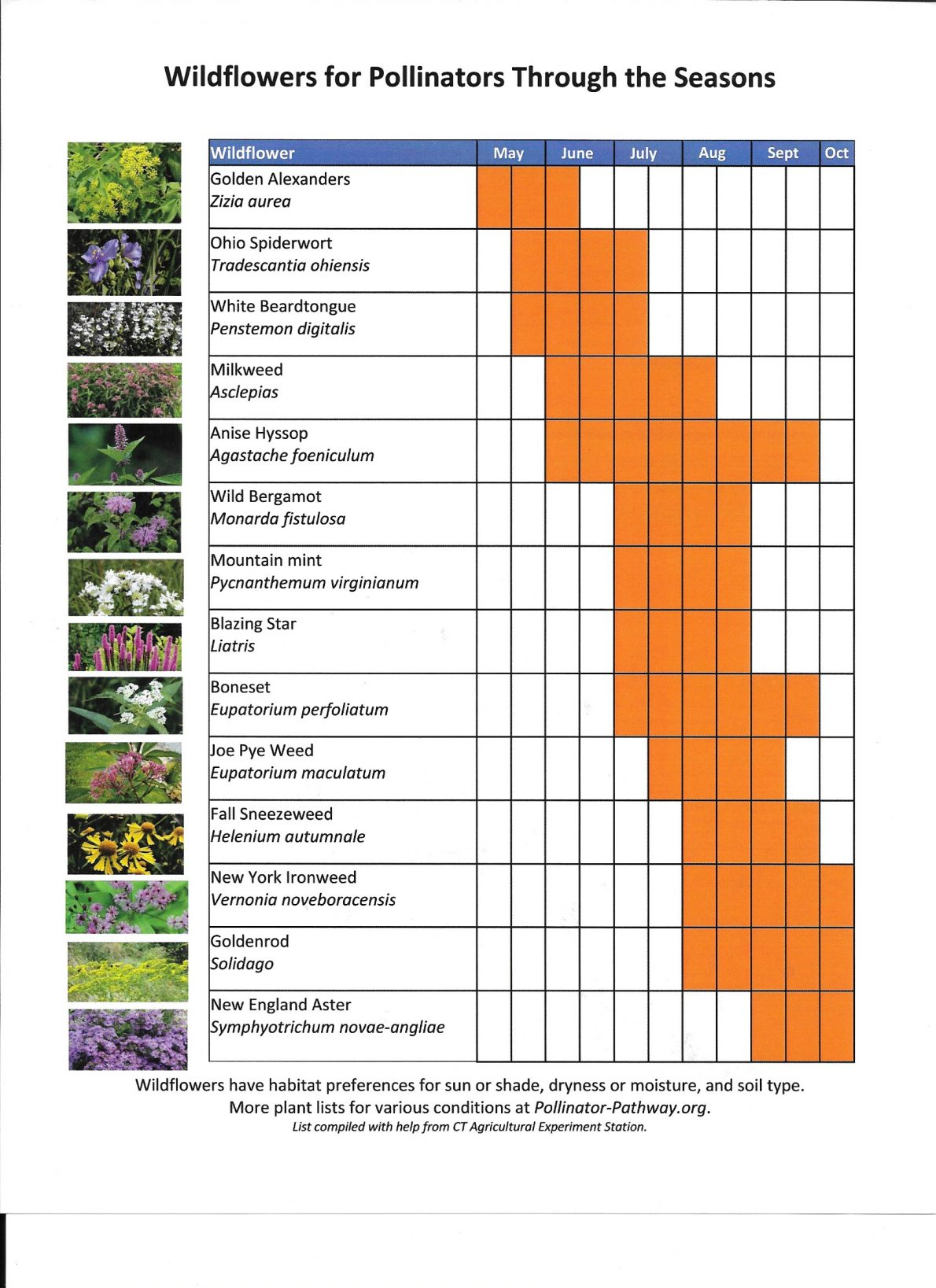 Wildflowers for Pollinators with Blooming Seasons