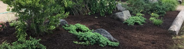 New Xeriscape Garden Debut at Bayley Beach